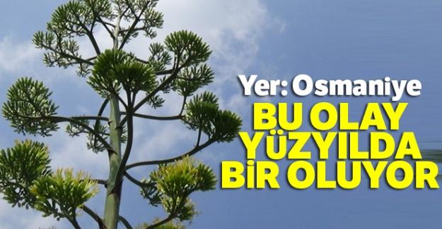 Osmaniye'de gerçekleşti: Bu olay yüzyılda bir oluyor
