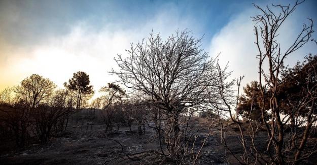 İzmir Büyükşehir Belediyesi, Karşıyaka büyüklüğündeki alanın yandığını açıkladı