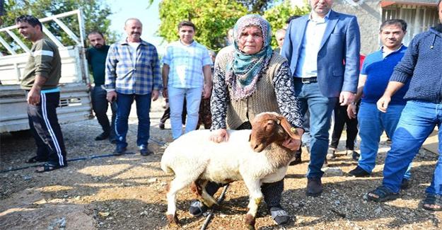 Koyunları çalınan Ayşe teyzenin gözyaşları dindi