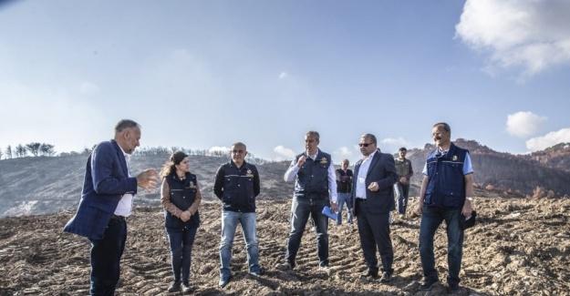 Yangın bölgesine ilk fidanlar 11 Kasım'da