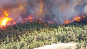 Gelibolu Yarımadası'nda orman yangını!