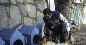Buca Belediyesi'nden 80 yeni kedi evi