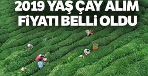2019 yaş çay alım...