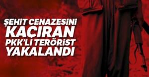 Şehit cenazesini kaçıran PKK'lı terörist yakalandı