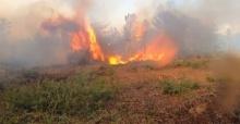145 hektar orman kasıtlı yakılmış